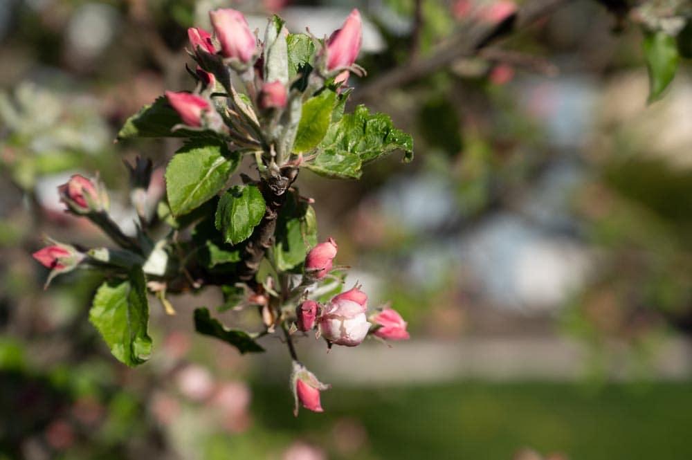 jardin-fleuri-haute-savoie